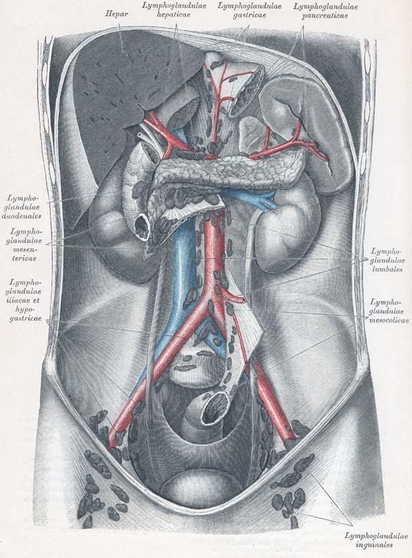 Lymphknotenschwellung im Bauchbereich. Cyberdoktor Patientenberatung.