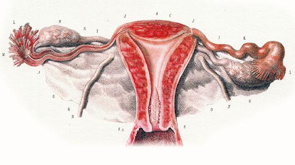 schwanger (Eileiter undurchlässig)?. Cyberdoktor