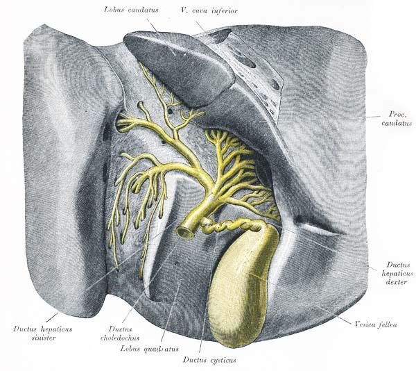 wo sitzen lymphdrüsen