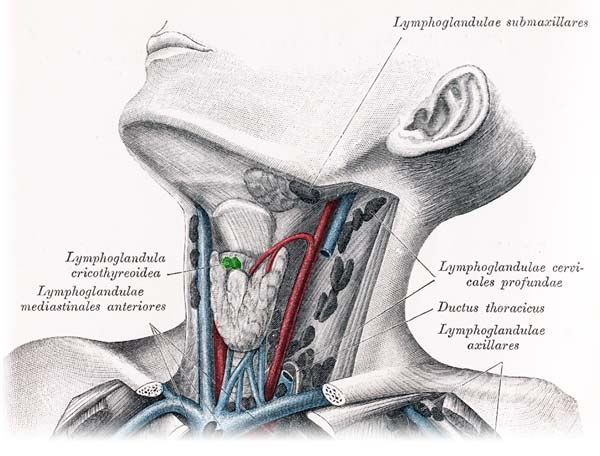 Harter Lymphknoten
