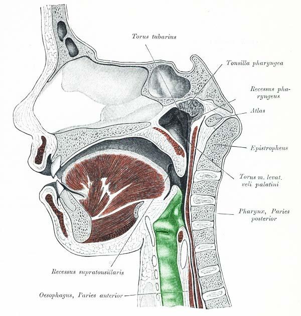 schluckbeschwerden ohne halsschmerzen