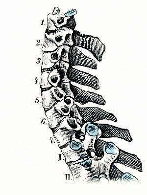 Die eiterigen Pickel auf der Person und den Rücken des Grundes und die Behandlung