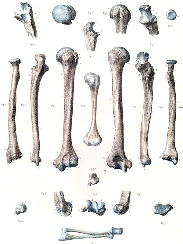 Atemberaubend Unterarmknochen Anatomie Fotos - Anatomie Ideen ...