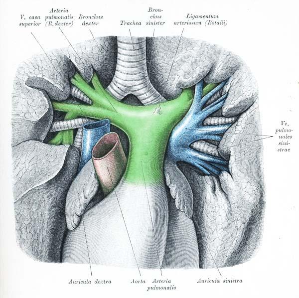 Lungenarterien Video