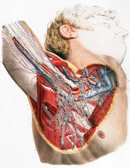 Schmerzhaft nicht knoten achselhöhle Lymphknoten in
