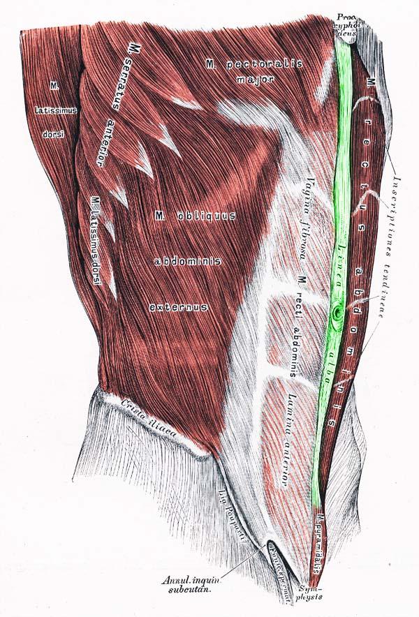 Bauchdeckenhernie: OP. Cyberdoktor Patientenberatung.