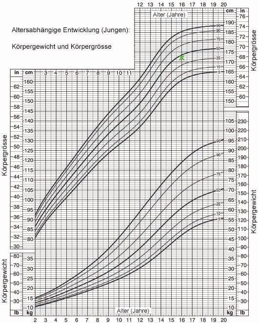 Peniswachstum mit dem Alter