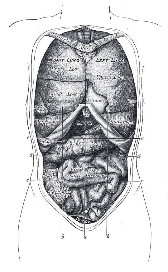 Schmerz / Krampf im oberen Bauchbereich. Cyberdoktor Patientenberatung.