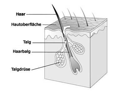 Hodensack talg (große und